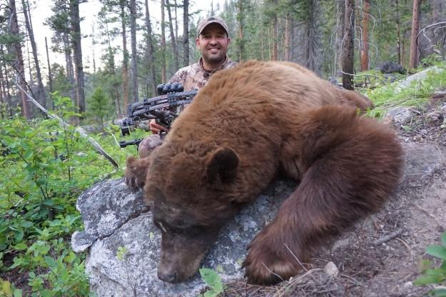 Cory Glauner bear