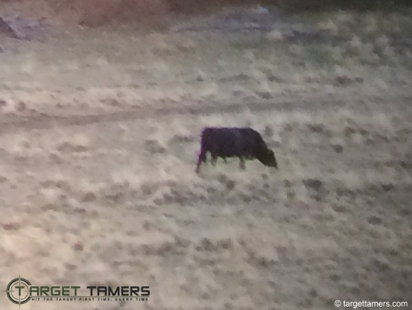 Photograph of cow in field looking through Carson 3D binoculars
