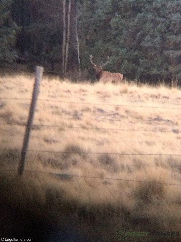 Photograph of a buck taken on iPhone through 10X42 binoculars