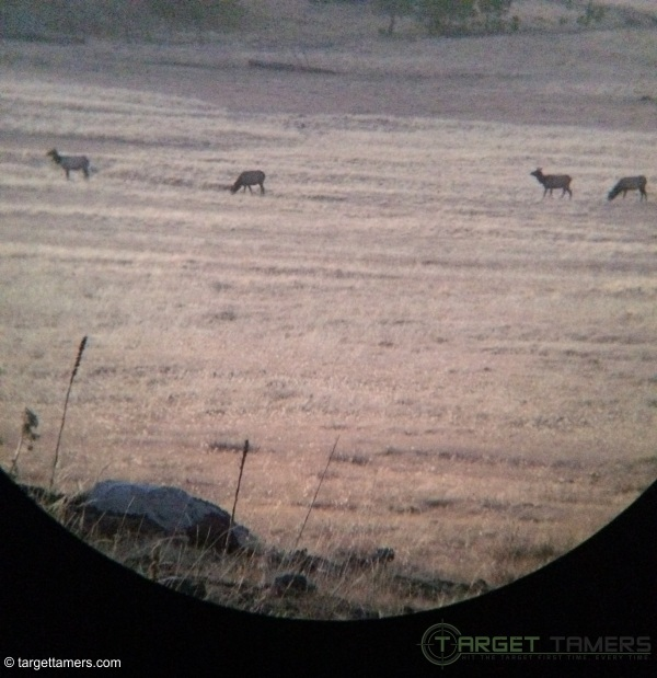 Photograph of several doe taken on iPhone through 10X42 binocular
