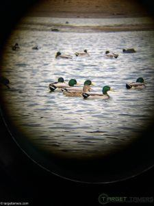 Photo of Ducks on Lake taken through Burris 10x42 Droptine Binoculars