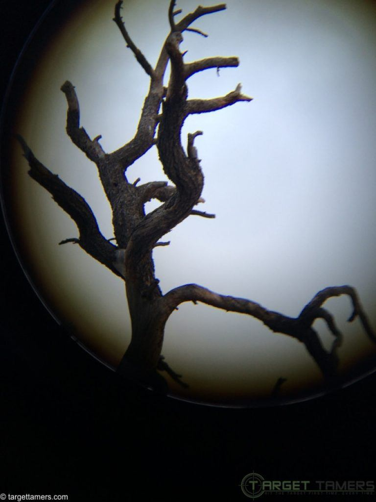 Top dead tree looking through binoculars.