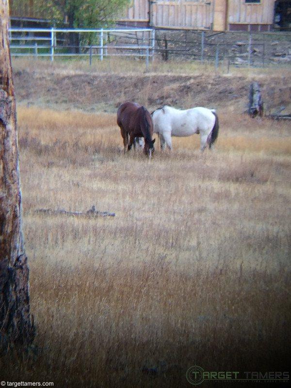Photo of Horses in Yard taken through binoculars