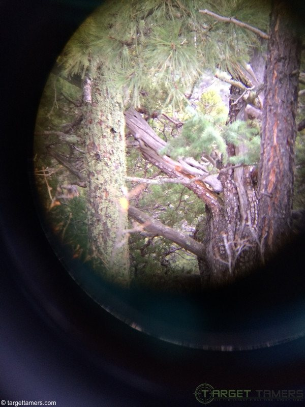 Douglas fir on left, Alligator Juniper on right