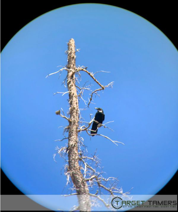 Pic of crow on dead tree taken with C1 10x42 binos