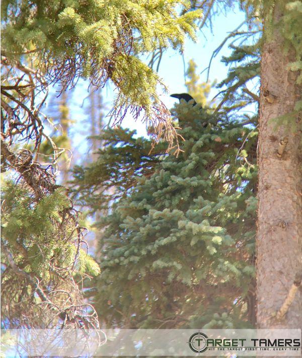 Photo of crow amoung foliage as seen through Maven 10x42