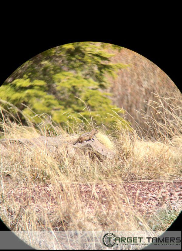 Chimpmonk pic taken through 10x42 C1