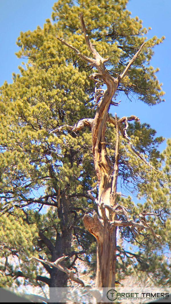 Photo of tree showing edge softening through Maven bino