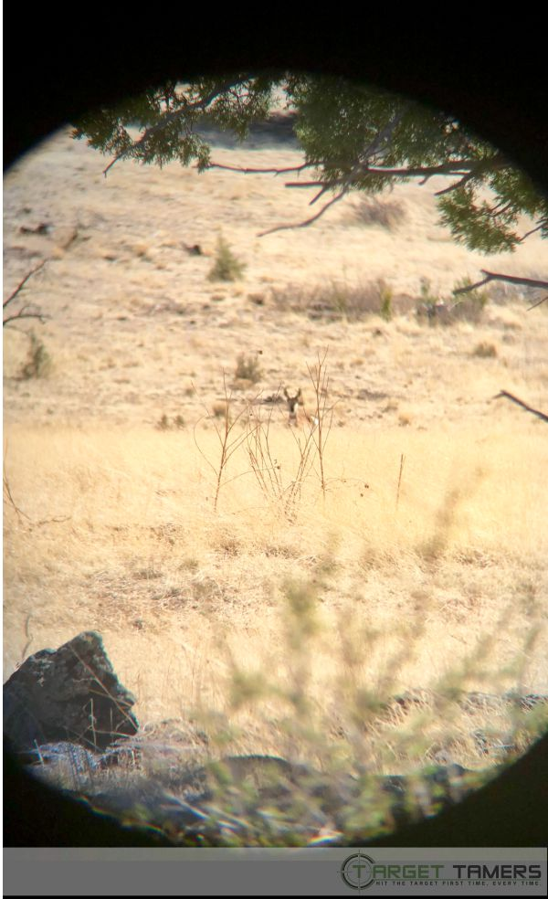 Photo of pronghorn as seen through 10x42 Maven C1