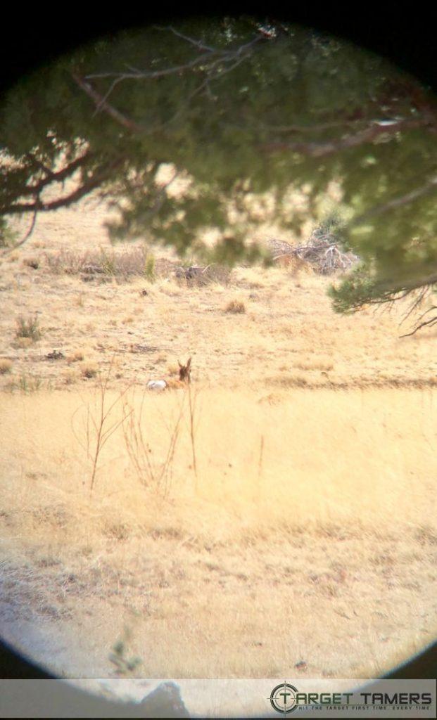 Pronghorn sighted through Maven 10x42 bino