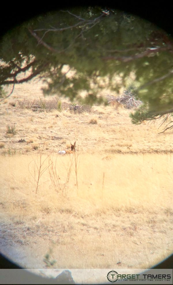 Pronghorn sighted through Maven 10x42 bino