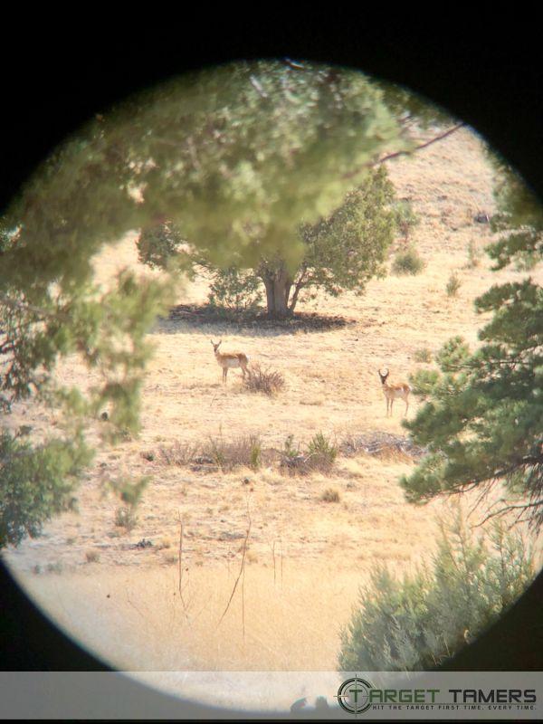 Grazing pronghorn sighted through 10x42 Maven binocular