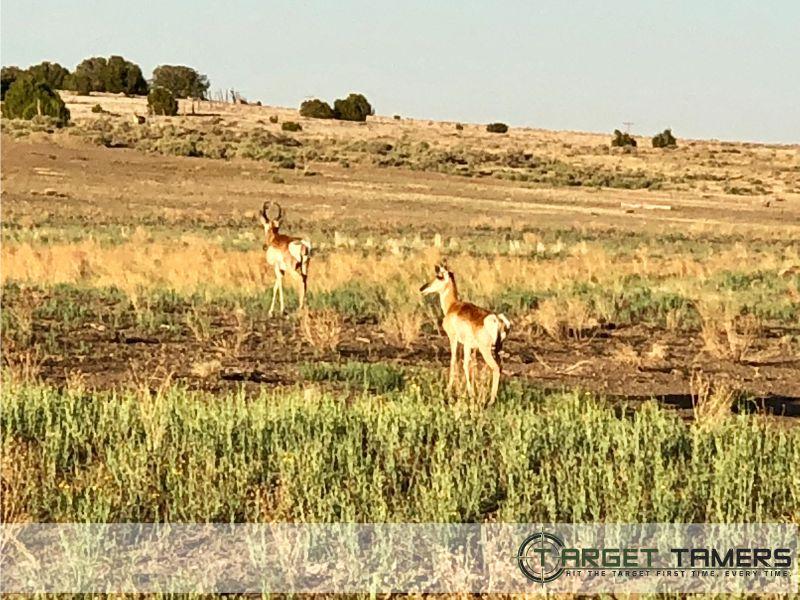 Photo of antelope taken through RS.1 Rifle scope