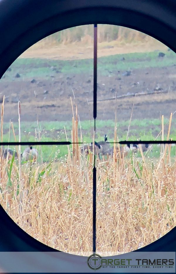 Photo of geese taken through RS.1 rifle scope with SHR reticle