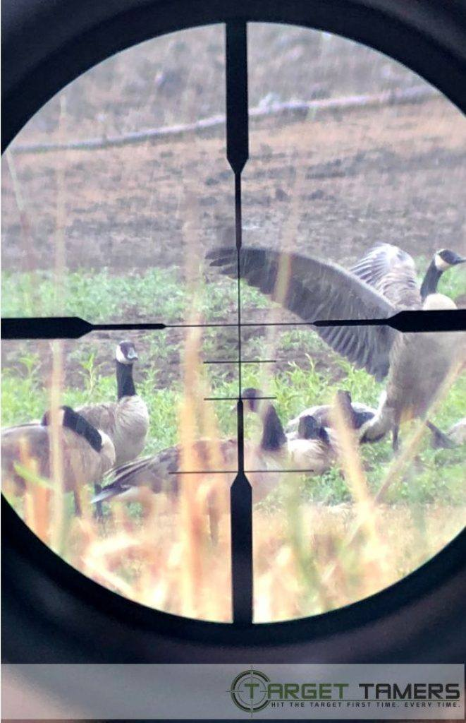 Photo of geese showing FFP SHR reticle on Maven rifle scope