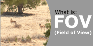 Field of View Explained – What Is FOV & How Does It Relate To Binoculars & Scopes?