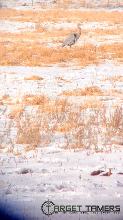 Pic of Brolga taken through Bushnell Nitro 10x42