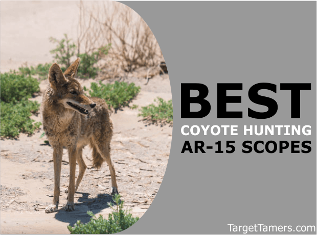 Coyote Hunting AR-15 Scopes