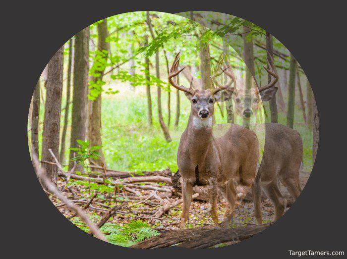 Double Vision of Deer Looking Through Binoculars