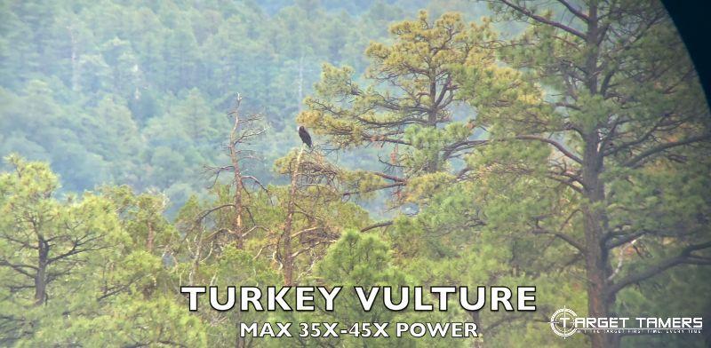 Turkey Vulture at Max Power looking through Maven CS1