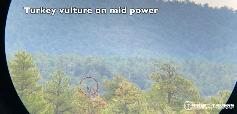 Turkey Vulture at Mid-power looking through Maven CS1