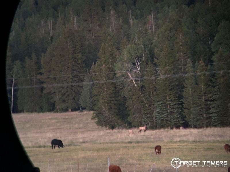Looking at Elk through the B.6 12x50 binoculars at 827 yards