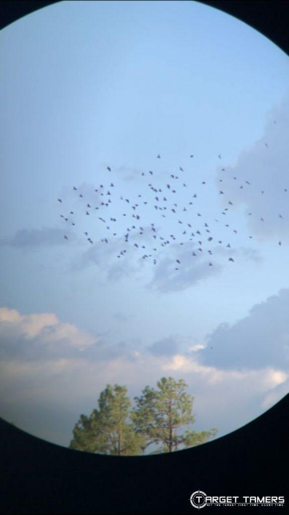Looking through Maven C.1 8x42 binoculars at a flock of birds