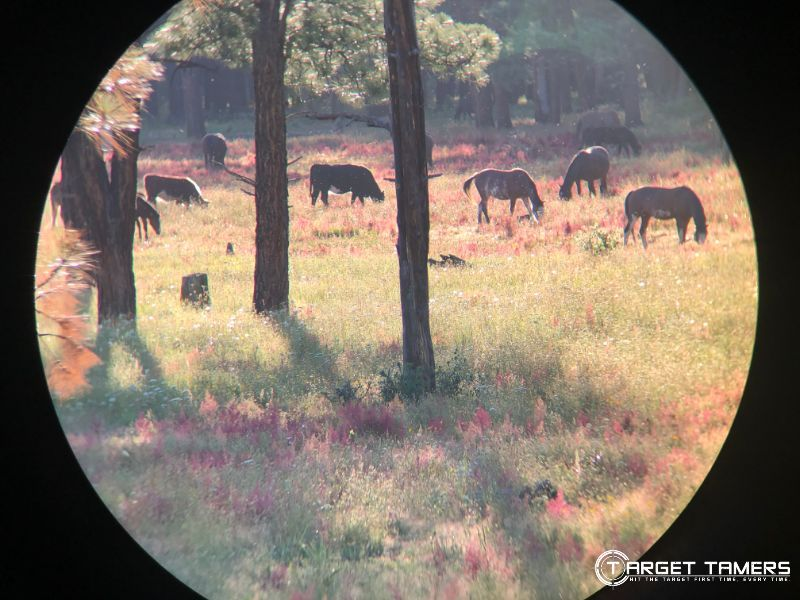 Looking through Maven C.3 12x50 binoculars at horses and cattle 220 yards away