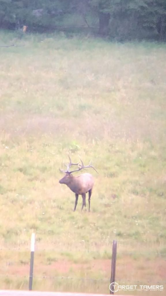 zoomed in on Elk in distance using Maven B1.2 10x42 binoculars